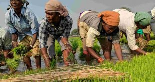 Area under Kharif crops increased by more than 59 lakh hectares