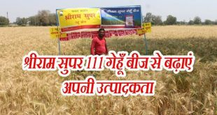 Shriram Super 111 wheat seed increased productivity of farmers of Madhya Pradesh