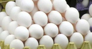 Flashed egg industry in winter, prices suddenly increased
